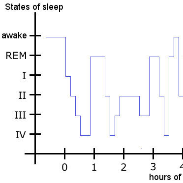 Stages of sleep with REM sleep at night